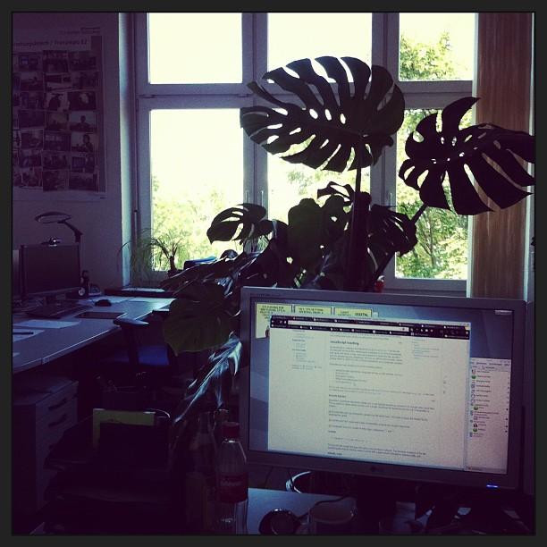Heute wieder im Dschungelbüro, wo es angenehm kühl und ruhig ist... #freiearbeitsplatzwahl - via Instagram